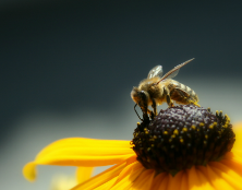 PILOTING A COMMUNITY APIARY